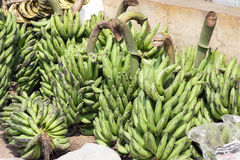 Plantain Royalty Free Stock Photos