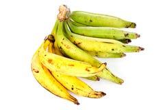 plantain Photo stock