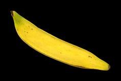 Plantain banana Royalty Free Stock Photos