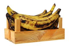 Plantain banana Royalty Free Stock Photo