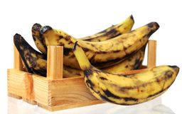 Plantain banana i Stock Photos