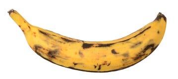 A plantain banana Stock Photos
