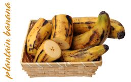 Plantain banana Royalty Free Stock Images