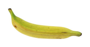 Plantain cooking banana Stock Photography