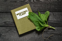 Plantain and directory medicinal plant. Common medicinal plant  plantain (Plantago major) and directory herbalist on an old wooden table Stock Photos