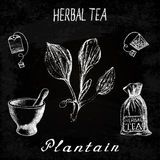 Plantain herbal tea. Chalk board set of  elements. On the basis hand pencil drawings. Herb Plantain, tea bag, mortar and pestle, textile bag. For labeling Royalty Free Stock Images