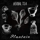 Plantain herbal tea. Chalk board set of  elements. On the basis hand pencil drawings. Herb Plantain, tea bag, mortar and pestle, textile bag, cup. For labeling Stock Photos