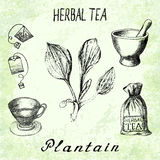 Plantain herbal tea. Set of  elements on the basis hand pencil drawings. Herb Plantain, tea bag, mortar and pestle, textile bag, cup. For labeling, packaging Royalty Free Stock Images
