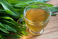 Plantain tea with fresh plantain leaves in the background royalty free stock photo