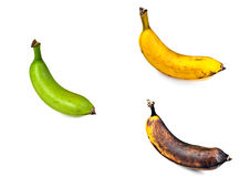Plantain – Three Stages of Ripeness Royalty Free Stock Photos