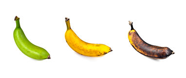 Plantain – Three Stages of Ripeness Royalty Free Stock Images
