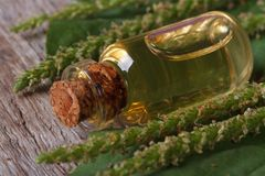 Plantain tincture in glass bottle on wooden background Royalty Free Stock Photo
