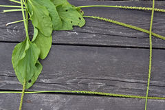 Plantain on a wooden background Stock Image