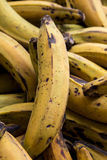 Plantains Royalty Free Stock Photo