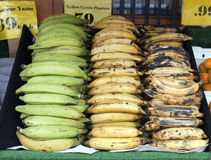Plantains in Bin. Green, ripe, and very ripe plantains in a sidewalk bin Royalty Free Stock Photography