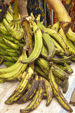 Plantains (Musa) Stock Photo