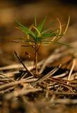 Plantan sörjer Arkivbilder