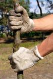 Plantando a árvore nas luvas brancas Imagens de Stock