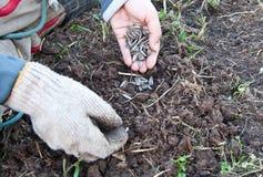 Plantando árvores Fotos de Stock Royalty Free