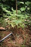 Plantando árvores Fotos de Stock