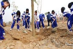 Plantando árvores Imagens de Stock Royalty Free