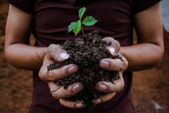 Plantando árvores Fotografia de Stock Royalty Free