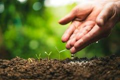 Plantando árvores Crescimento da árvore, plântula no verde da natureza e ouro fotografia de stock royalty free