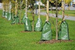 Plantando árvores na cidade Fotos de Stock