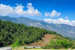 Plantando árvores para impedir corrimentos à estrada do montanhês Foto de Stock Royalty Free