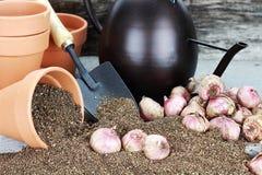 Plantando bulbos Foto de Stock