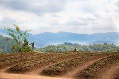 Plantando campos Fotos de Stock Royalty Free