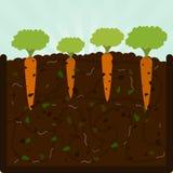 Plantando cenouras e adubo ilustração do vetor