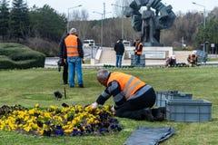 Plantando a flor à cidade foto de stock