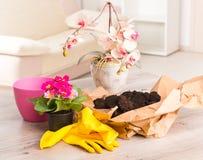 Plantando a flor do colorfull em um vaso de flores imagem de stock royalty free