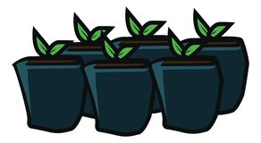 Plantando a flor na jardinagem do potenciômetro ilustração royalty free