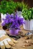 Plantando flores Fotografia de Stock Royalty Free