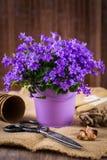 Plantando flores Fotos de Stock Royalty Free