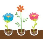 Plantando flores Imagem de Stock