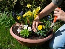 Plantando flores da mola imagens de stock