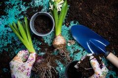 Plantando flores da mola, conceito de jardinagem do passatempo Fotos de Stock