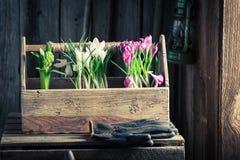 Plantando flores da mola na casa de campo rústica Imagens de Stock