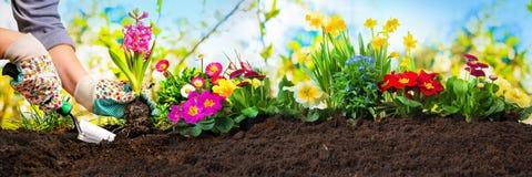 Plantando flores em um jardim imagem de stock