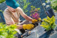 Plantando flores no jardim Fotos de Stock