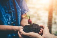 Plantando florestas para reduzir o aquecimento global fotografia de stock royalty free