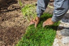 Plantando a grama nova imagens de stock