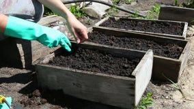 Plantando las semillas para cultivar un huerto cama almacen de metraje de vídeo
