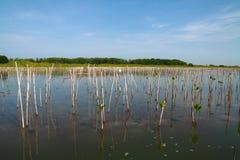 Plantando o ambiente verde Imagem de Stock