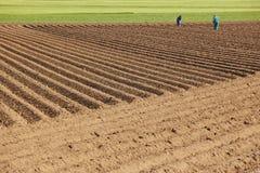 Plantando o campo ajardine com o prado à terra e verde Agricultu Imagem de Stock Royalty Free