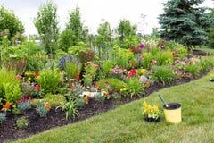 Plantando o celosia amarelo em um jardim colorido foto de stock