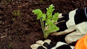 Plantando o jardim vídeos de arquivo